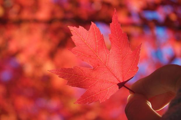 autumn-969929_1280